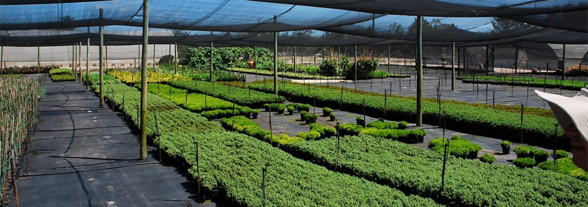rooting hormone nursery 3