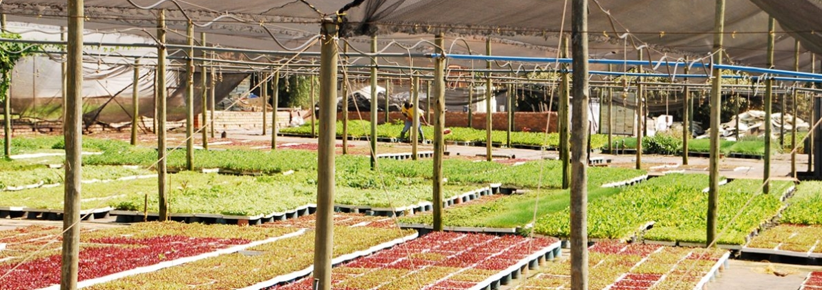 rooting hormone nursery 2